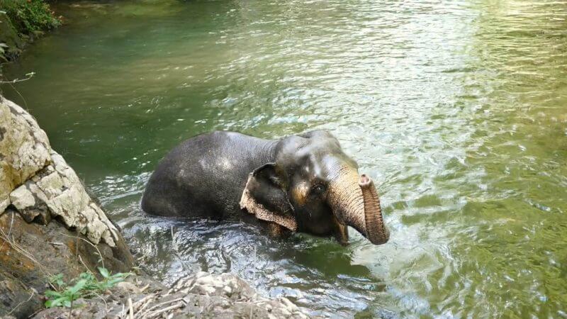 Koh Chang Thailand Elephant