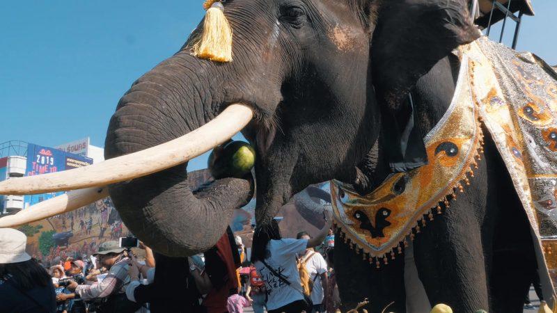 Elephant Round-Up Festival