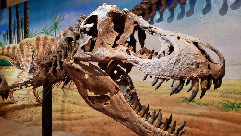 Sirindhorn Dinosaur Museum